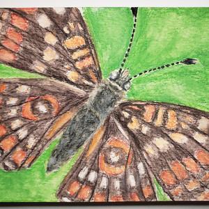 #160 Scarce Fritillary Butterfly