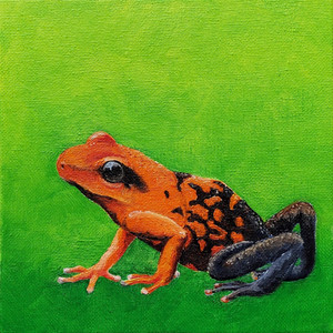 #25 Silverstone's Poison Frog