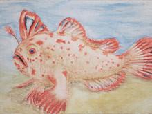 #328 Red Handfish
