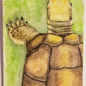 #70 Yellow-headed box turtle
