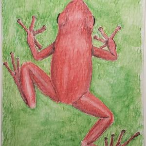 #203 Splendid Poison Frog