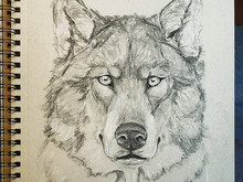 Intermission - Wolf