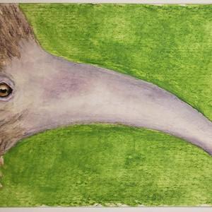 #171 Attenborough's Long-beaked Echidna