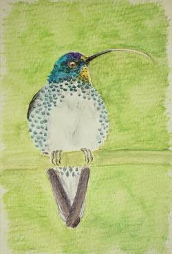#309 Juan Fernandez Firecrown - Female