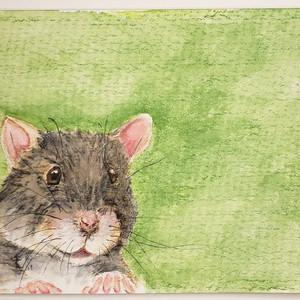 #180 Kondana Soft-furred Rat