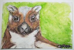 #116 Namdapha Flying Squirrel