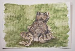 #123 Kaikatti Bush Frog