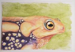 #122 Resplendent Shrub Frog