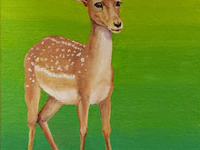 #76 Persian or Mesopotamian Fallow Deer