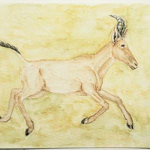 #217 Bubal Hartbeest