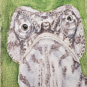 #197 Bizarre-nosed Chameleon