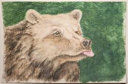 #211 Marsican Brown Bear