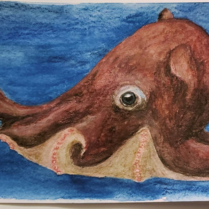 #88 Opisthoteuthis Chathamensis
