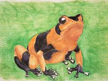 #365 Lehmann's Poison Frog
