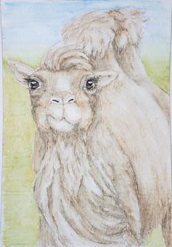 #247 Wild Bactrian Camel