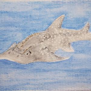#246 Bowmouth Guitarfish