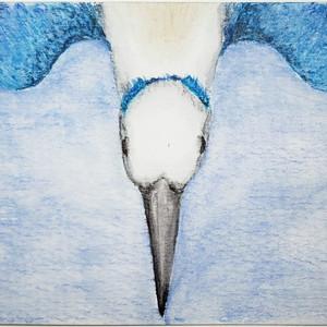#206 Marquesan Kingfisher