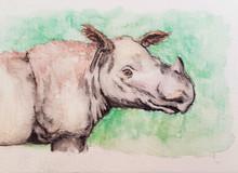 #4 Sumatran Rhino