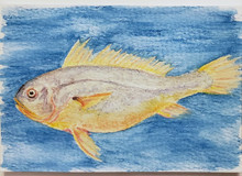 #73 Large Yellow Croaker