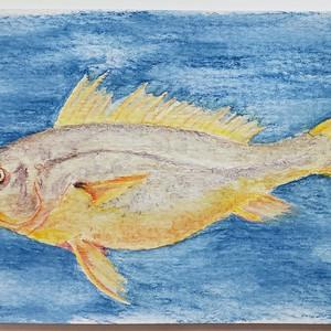 #73 Large Yellow Croaker