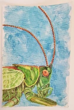 #51 Sardinian Green Bush Cricket