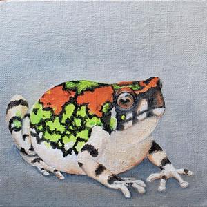 #26 Malagasy Rainbow Frog