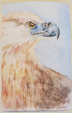 #7 Madagascar Fish Eagle