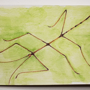 #141 Ridley's Stick Insect