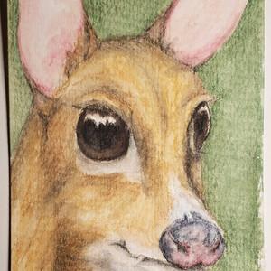 #157 Vietnam Mouse Deer
