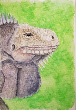 #207 Lesser Antillean Iguana