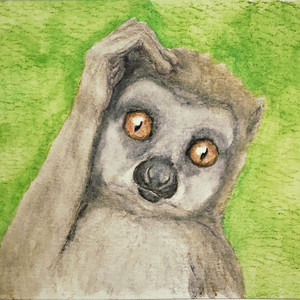 #326 Cleese's Wooly Lemur