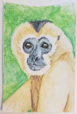 #77 Southern White-cheeked Gibbon