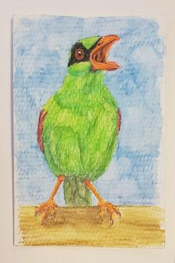#48 Javan Green Magpie