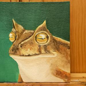 #4 Horned Marsupial Frog