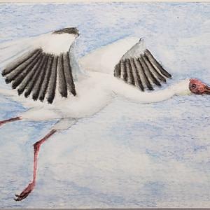 #225 Siberian Crane