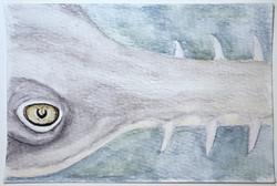 #222 Largetooth Sawfish