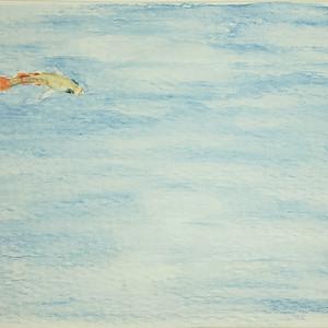 #302 Red-finned Blue-eye