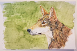 #42 Red Wolf