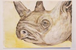 #57 Black Rhinoceros