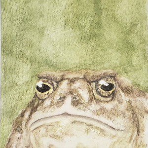 #343 Wyoming Toad