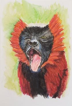 #17 Red-ruffed Lemur