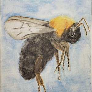 #269 Franklin's Bumblebee