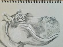 Intermission - Hippo