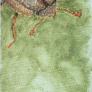 #347 Ironclad Beetle