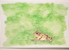 #118 Large Ponmudi Bush Frog