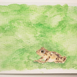 #118 Large Ponmudi Bush Frog