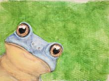 #335 Spiny-knee Leaf Frog