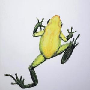 #28 Black-legged Poison Dart Frog