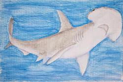 #271 Scoophead Shark Critically Endangered Scoophead Shark