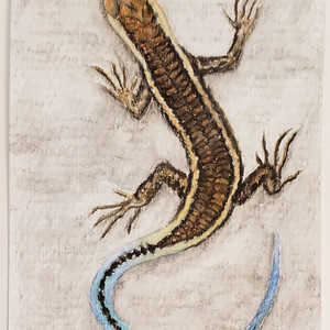 #62 Christmas Island Blue-tailed Shining-skink